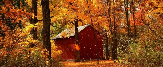 Falling Leaves and Falling Temperatures: Time For A New Furnace