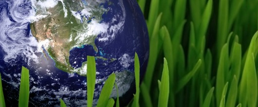 5 Tips for Going Green and Saving Green