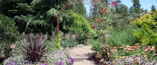 Revamp your garden for summer and revitalize